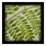 Leafy Fern Poster af June Hunter