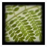 Leafy Fern Poster by June Hunter