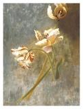 Tulip Rhythms Posters by Fran Di Giacomo