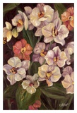 Orchids II Art by Shari White