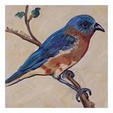 Bird XII Plakater af Suzanne Etienne