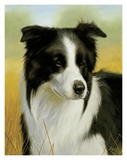 Border Collie Prints by John Silver