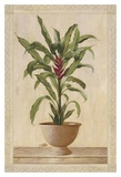 Potted Palm II Posters by Welby 