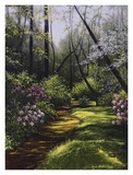 Spring Woods Prints by Lene Alston Casey