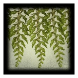 Tassle Fern I Prints by June Hunter
