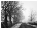 Misty Tree-Lined Road Poster von Stephen Rutherford-Bate
