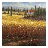 Tuscan Wheat Prints by  Hulsey