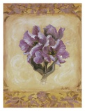 Tulip Violeta Prints by Shari White