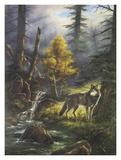 Amerikanischer Grauwolf Kunstdrucke von Rudi Reichardt