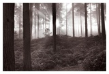 Forest Mist I Prints by Richard Osbourne