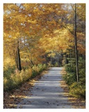 Late Fall Prints by Diane Romanello