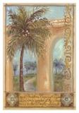 Shari White - Kokosová palma Reprodukce