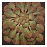 Succulent II Prints by Janet Kruskamp