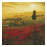 Shades of Poppies Print by Steve Thoms