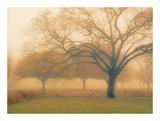Memory of Trees Posters af M. Ellen Cocose