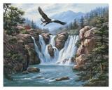 Schwebender Adler Poster von Sung Kim