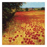 Field of Red and Gold Affiches par Steve Thoms