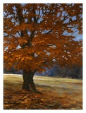 Fall Maple Prints by Bruce Braithwaite