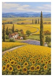 Sunflower Field Prints by Sung Kim
