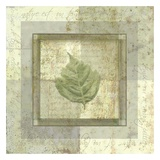 Leaf Carre IV Prints by Pierre Fortin