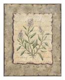 Vintage Herbs, Sage Affiches par Constance Lael