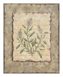Vintage Herbs, Sage Print by Constance Lael