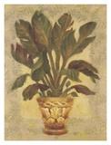 Shari White - Banana Palm Obrazy