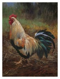 White And Green Rooster Prints by Nenad Mirkovich