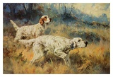 Two Setters Prints by Percival L. Rosseau