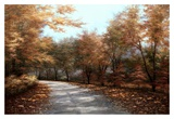 Maple Lane Prints by Diane Romanello