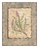 Vintage Herbs, Thyme Affiche par Constance Lael