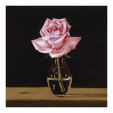Pink Rose Poster by Patrick Farrell