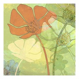 Poppy Shadows Poster van Jan Weiss