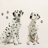 Dalmatiens Wall Decal