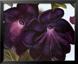 Black and Purple Petunias Art Print by Georgia O'Keeffe
