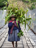 Peru, a Woman with a Load of Maize Stalks to Feed to Her Pigs Crosses the Urubamba River Fotografie-Druck von Nigel Pavitt