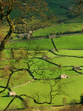 Traditional Farming Valley in Swaledale, Yorkshire Dales National Park, England Fotografisk tryk af Paul Harris