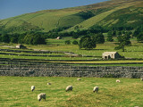 Field Walls of Littondale, Yorkshire Dales National Park, England Photographic Print by Paul Harris