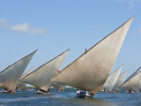 Kenya; Mashua Sailing Boats Participating in a Race Off Lamu Island Photographic Print by Nigel Pavitt