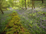 Springs Wood, Yorkshire Dales National Park, England Photographic Print by Paul Harris