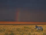 The Late Afternoon Sun Breaks Through Rain Clouds in the Masai Mara National Reserve Photographic Print by Nigel Pavitt
