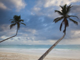 Dominican Republic, Punta Cana Region, Bavaro, Bavaro Beach Palms Photographic Print by Walter Bibikow