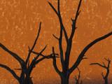 Dead Trees in Dry Clay Pan, Dead Vlei, Soussusvlei, Namibia, Africa Fotodruck von Peter Adams