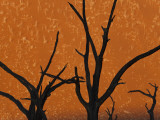 Dead Trees in Dry Clay Pan, Dead Vlei, Soussusvlei, Namibia, Africa Photographic Print by Peter Adams