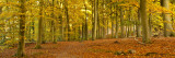 Woods in Autumn Time, Surrey, England, Uk Photographic Print by Jon Arnold