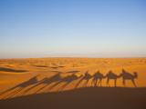 Tunisia, Ksour Area, Ksar Ghilane, Grand Erg Oriental Desert, Camel Caravan Photographic Print by Walter Bibikow