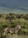 Kenya, Laikipia, Lewa Downs Photographic Print by John Warburton-lee