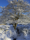Wales, Snowdonia; a Tree Covered in Hoar Frost on a Cold Winters Day Photographic Print by John Warburton-lee
