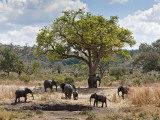 A Small Herd of Elephants Leaves a Mud Wallow in Ruaha National Park Photographic Print by Nigel Pavitt