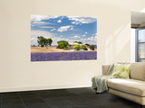 Farmhouse in a Lavender Field, Provence, France Wall Mural by Nadia Isakova